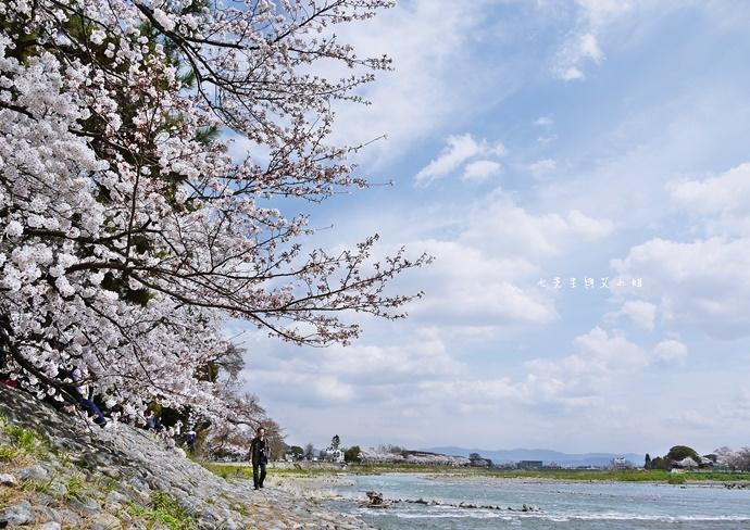 24 京都 嵐山渡月橋 賞櫻 櫻花 Saga Par 五色霜淇淋 彩色霜淇淋