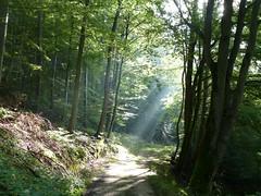 Morgenstund im Wald