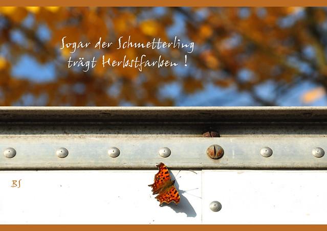 Sogar der Schmetterling trägt Herbstfarben Herbst Oktober Laubverfärbung bunt Brauntöne Orangetöne Gelbtöne Foto Brigitte Stolle Oktober 2015