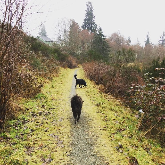 A little rain never bothers these PNW dogs.