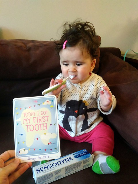 1st Tooth