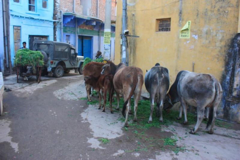 Бунди Индия,