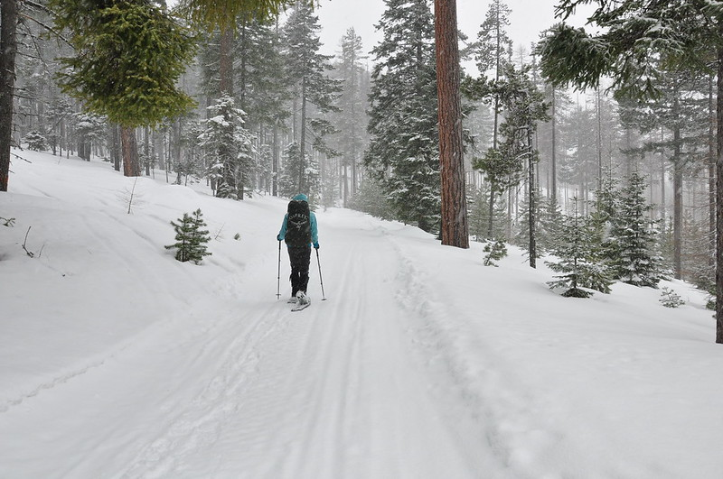 Snowshoeing up the road
