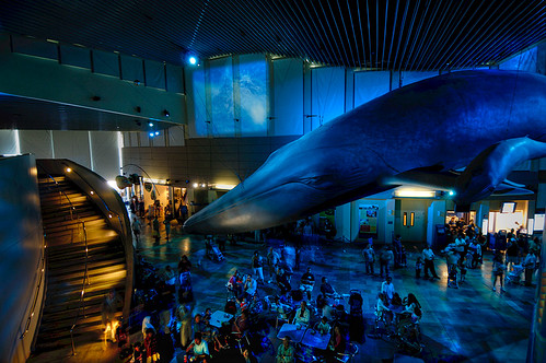 Blue Whale A Replica Of A Blue Whale Hanging In The