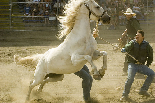 Wild Horses Rearing And Bucking Wild Horse Race | Will...