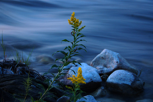River Flower in low light DSC_6532 | by Rezmutt