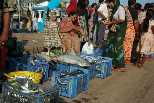 Ratnagiri Fish Market Vivek Joshi Flickr