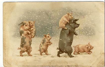 Vintage Antique Pig Postcard | Vintage Antique Pig ...