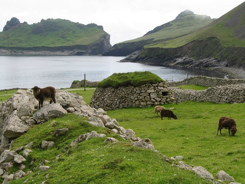 Soay sheep on Hirta, St Kilda, with Cleits | by Commonorgarden