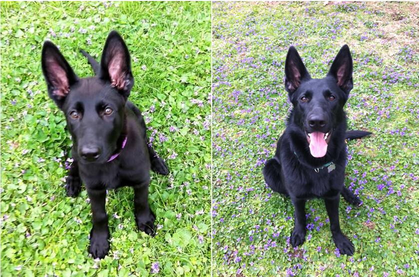 fidelco guide dog foundation jobs