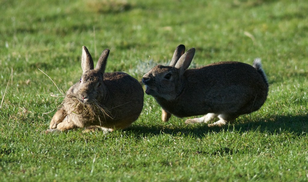resume rabbit reviews moneystancecom - Resume Rabbit Review