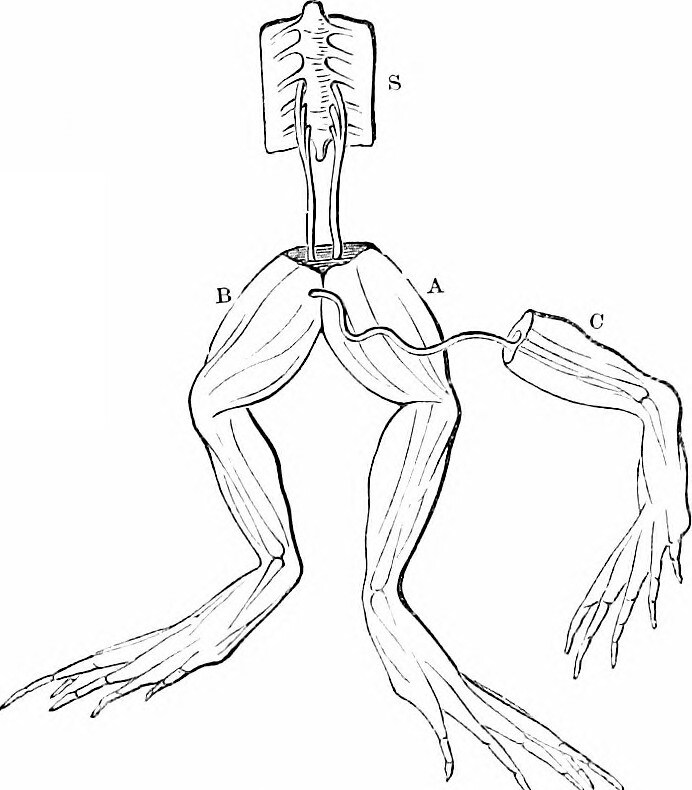 Image From Page 361 Of On The Anatomy Of Vertebrates 18 Flickr
