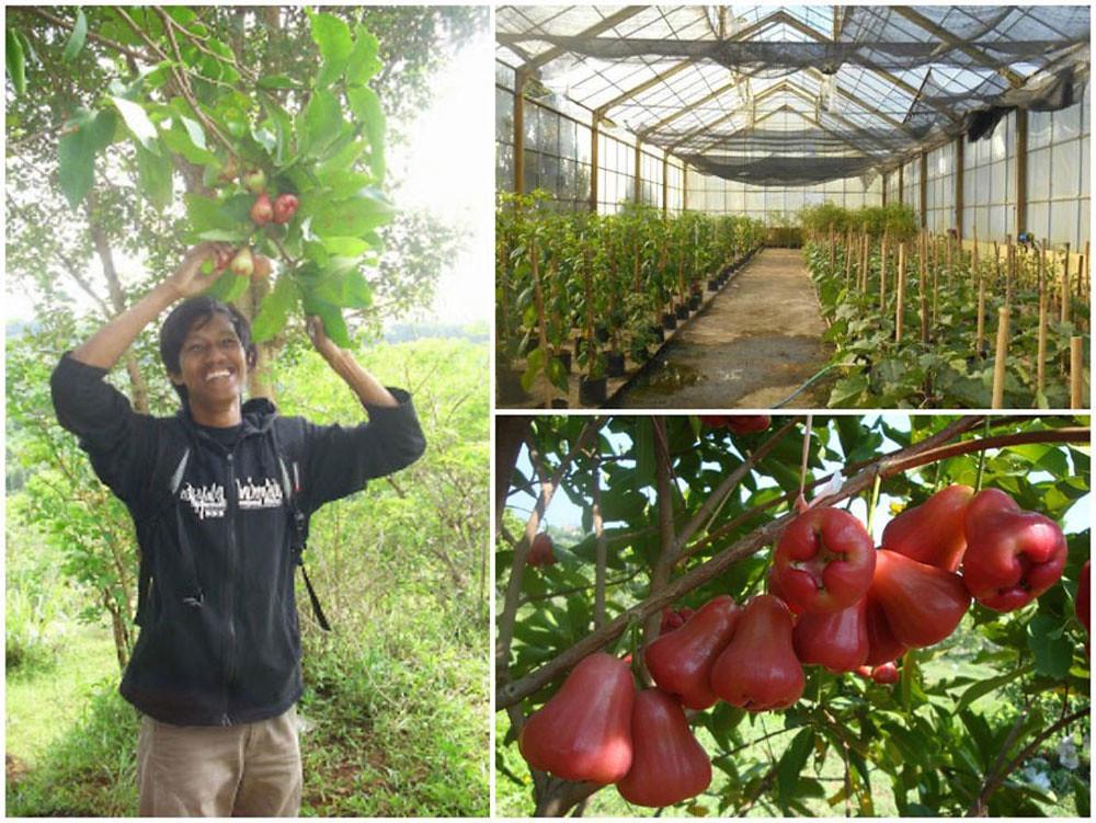 19-fruits