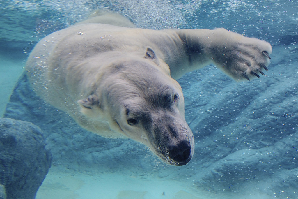Are polar bears left handed?   To find out click here for ...