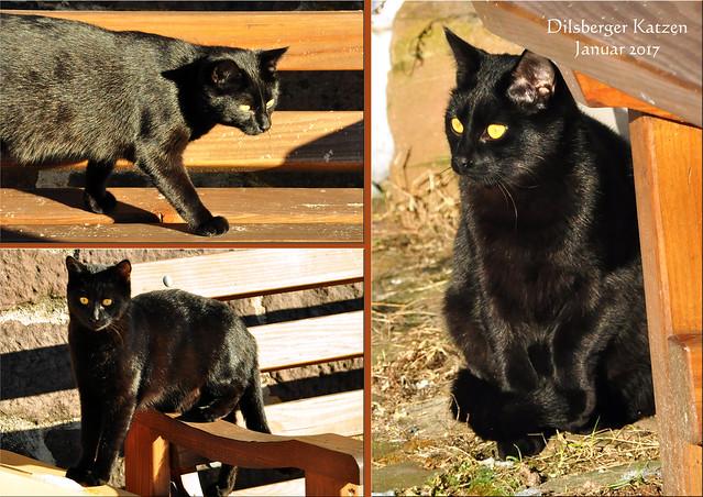 Dilsberg - Kleiner Odenwald - Neckartal: Katze, Katzen, Katzenbekanntschaft, Katzenfoto, Katzenbild ... Fotos und Collagen: Brigitte Stolle, Mannheim