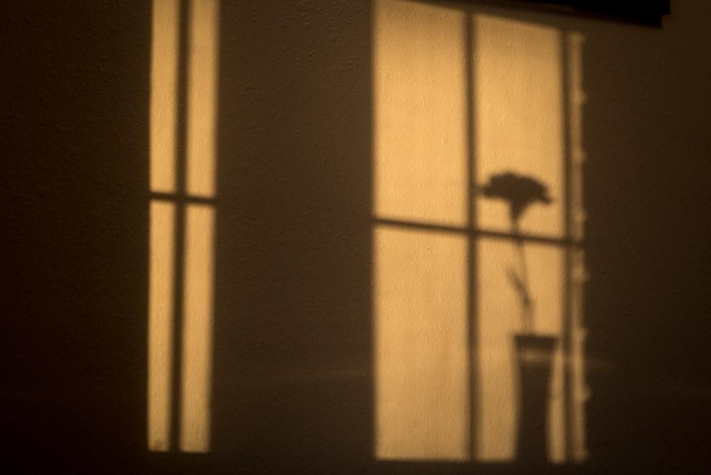 Carnation Shadow