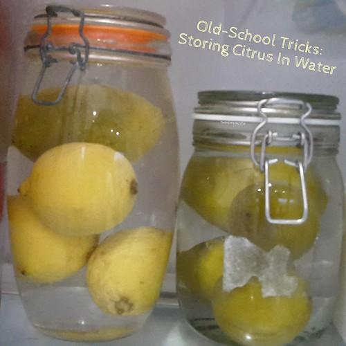 Homesteading: Citrus Spotlight