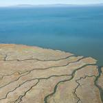 Dendritic marsh channels on San Francisco Bay