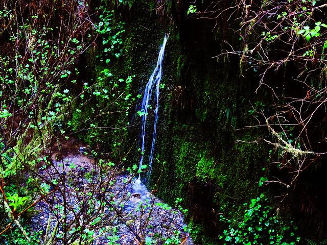 Fern Canyon, Prairie Creek Redwoods State Park