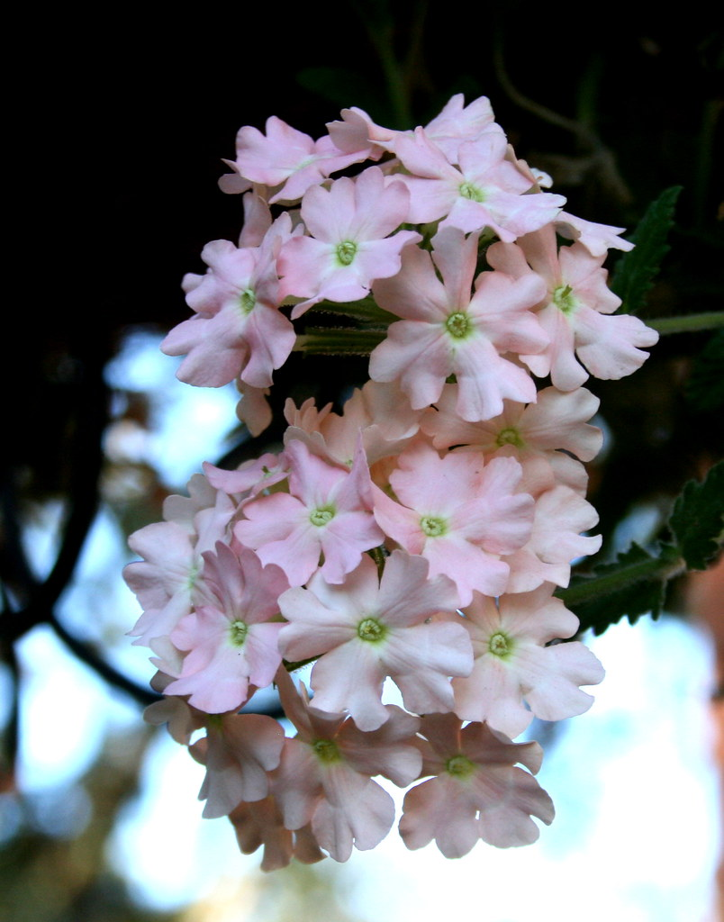 Some pretty flowers born1945 flickr some pretty flowers by born1945 some pretty flowers by born1945 mightylinksfo