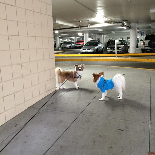 Kiki and Happy trying to enter a parking garage, with a number of cars in the background. Why? Who knows.
