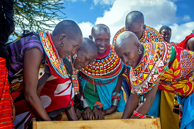 Kenyan Pastoralists Prepare Hay Bales