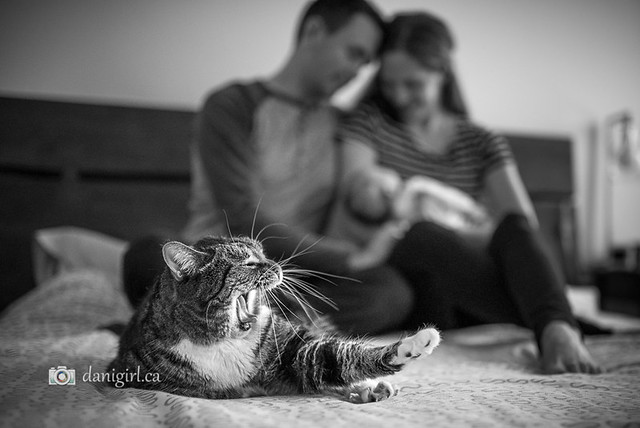 Family portrait with pet cat by Ottawa photographer Danielle Donders