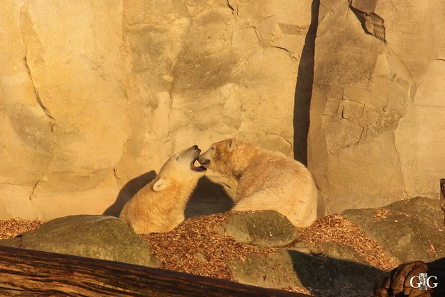 Besuch Zoo am Meer 30.12.201610