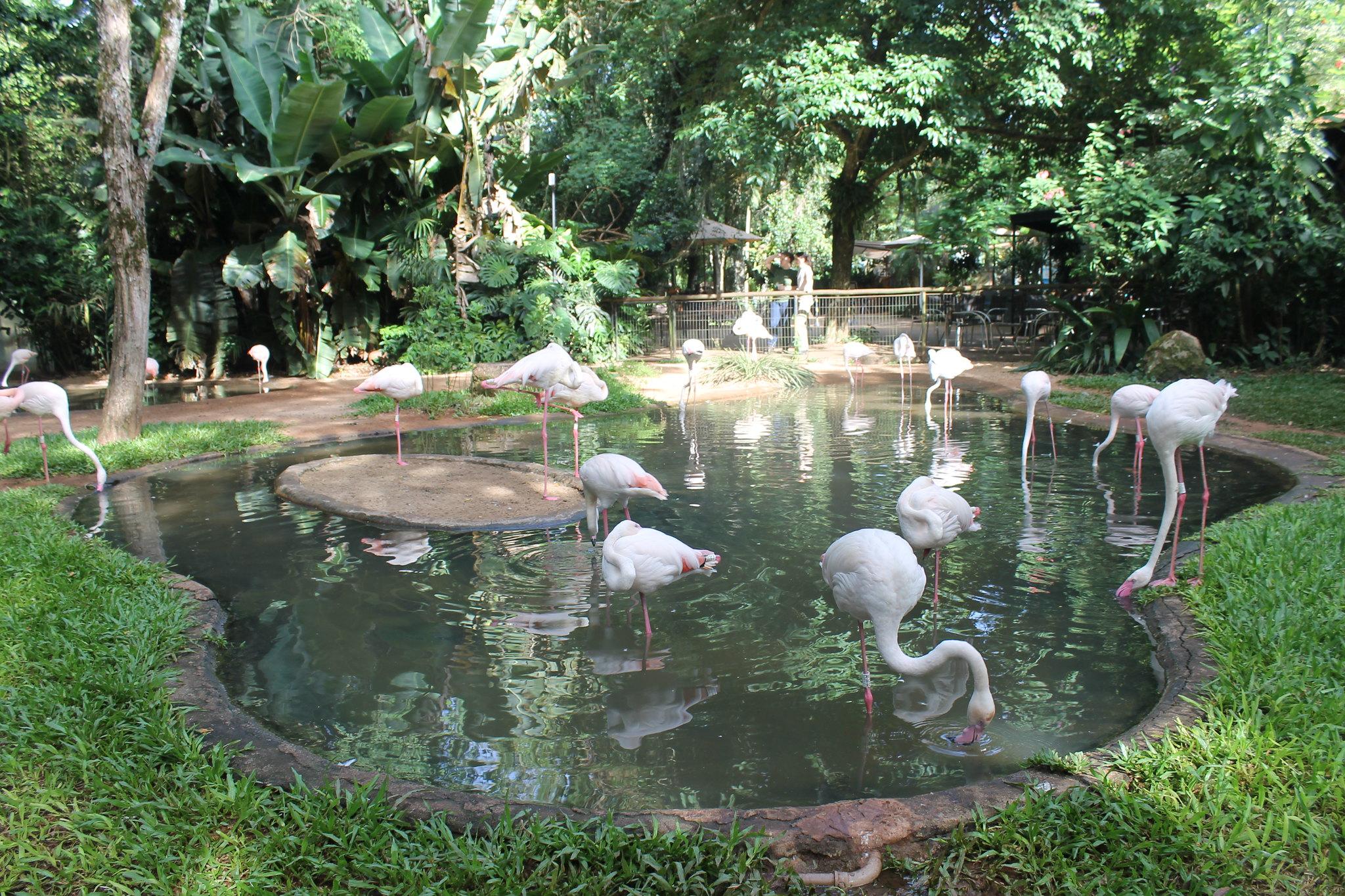 parque-das-aves3