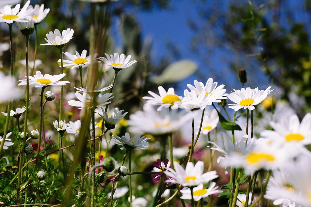 обои для рабочего стола широкоформатные лето цветы № 295769 бесплатно