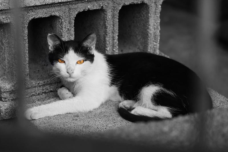 Where's the cats? 巷裡尋貓|Chiayi 嘉義