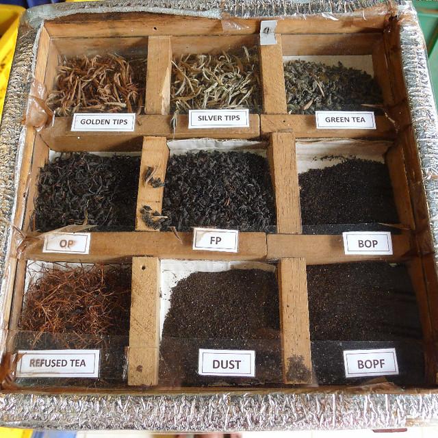 165-tea-plantation