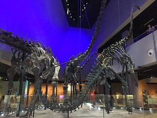 Diplodocid sauropod skeletons, Lee Kong Chian Natural History Museum, Singapore | by Jack at Wikipedia