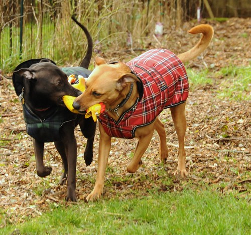 Dog Walking Waterproof Jackets