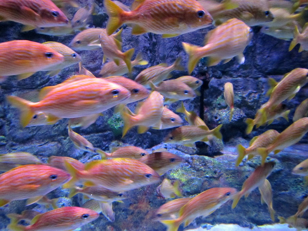 Freshwater fish kansas city -  More Fish By Cameliatwu Off And On