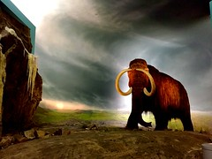 Royal British Columbia Museum Mammoth
