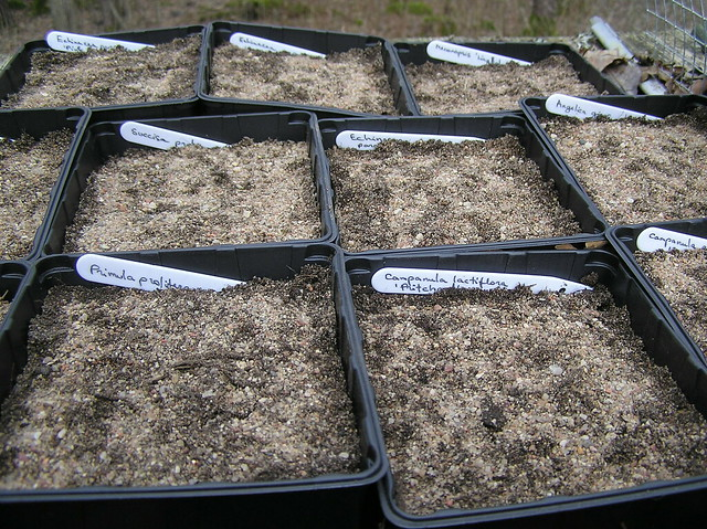Winter Sowings
