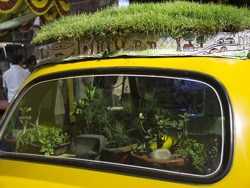 धनंजय चक्रवर्ती अपने कार के अन्दर भी पौधे लगा रखे हैं