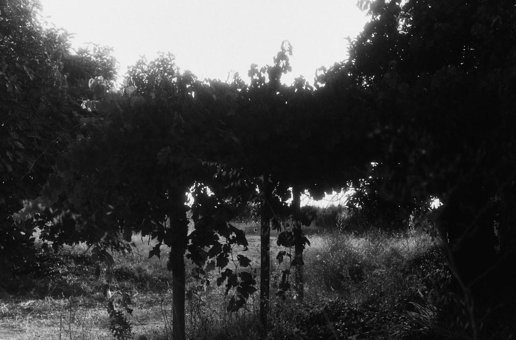 Casa en plantación V.