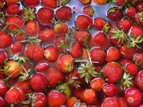Fraises par kilos une journ e la cueillette de servigny flickr - Comment cueillir des fraises ...
