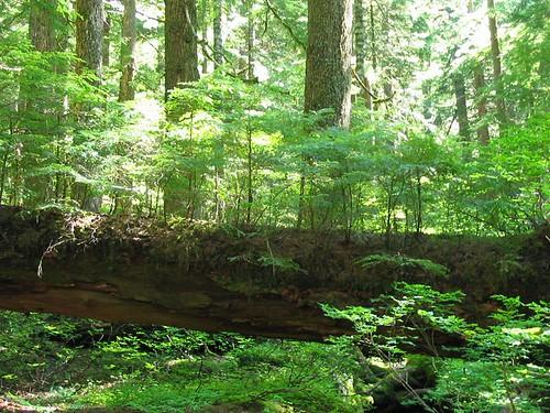 mile log
