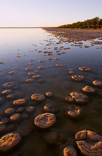 Thrombolites of Lake Clifton | by Devar