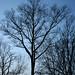 BN0858 Tree