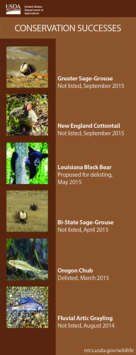 Conservation Successes infographic