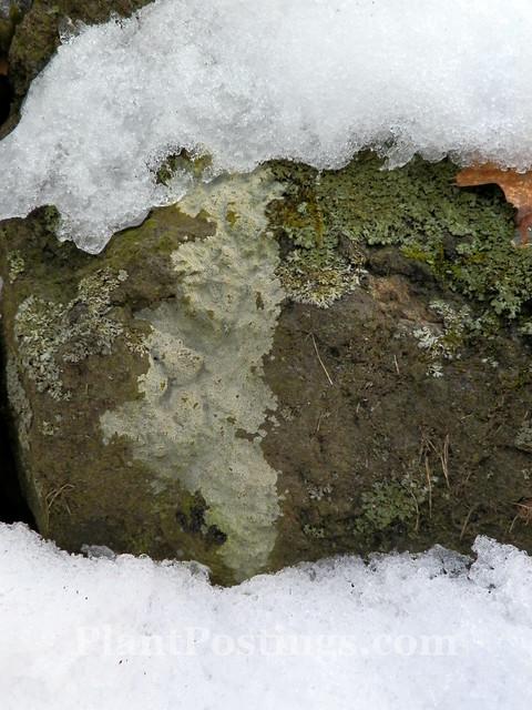 structure & lichens