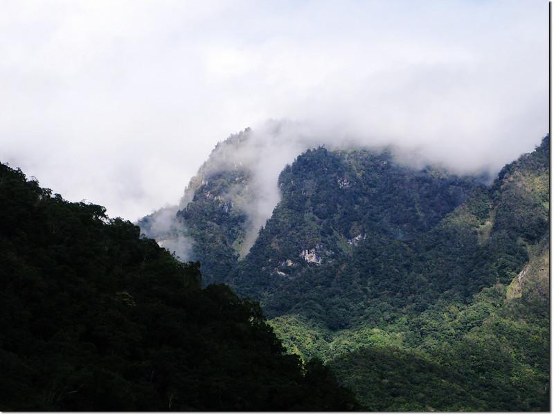 第一處蕨類區望北邊山頭 2