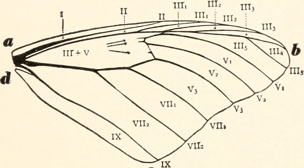 Image from page 100 of \