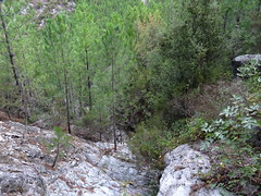 Au croisement du sentier RG du Vaglie avec le ruisseau descendant de la pointe 897 : la descente du ruisseau vers le Vaglie