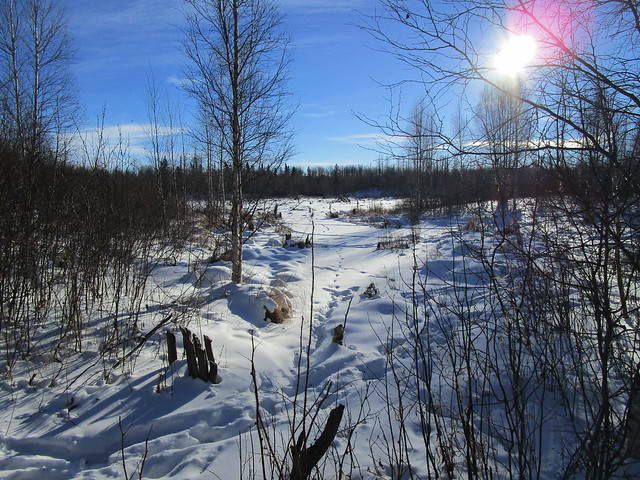 2017-01-15 Hike: Oster Lake