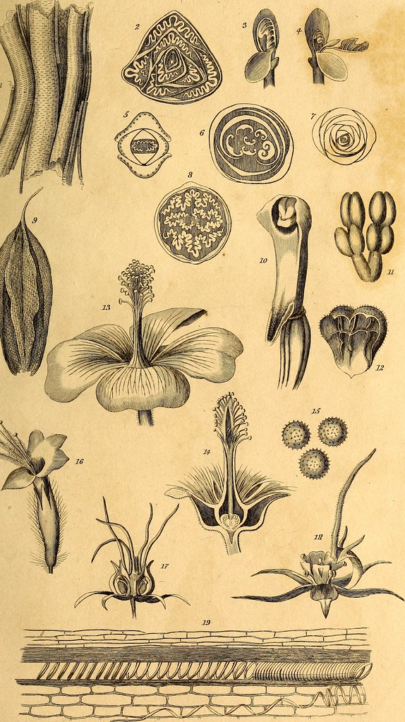 Image From Page 46 Of Elements Of The Philosophy Of Plant Flickr